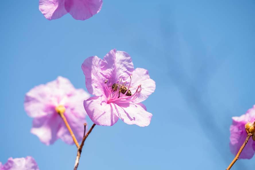Spring flowers began to bloom / 2020.3.30
