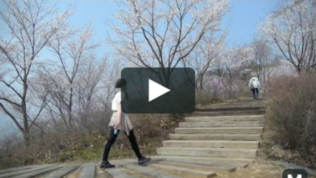 2015 nature in cheongpyeong spring cherry blossoms